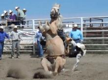 bronc loses rider