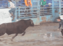 bullfighter goes flying