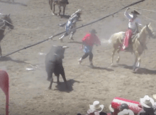 cheyenne highlights bull roped