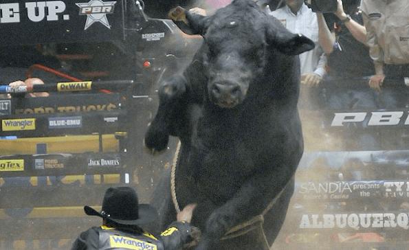 bull larger than life
