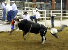 wild bull rider