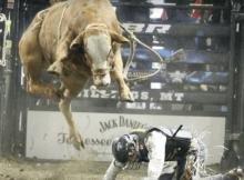 bull jumping over rider