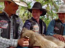 AUSTRALIAN PBR COWBOYS KOALA