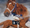 secretariat painting:therodeocowboy.com