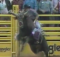 wolfman v custer:therodeocowboy.com
