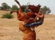 thrownoffhorse :therodeocowboy.com