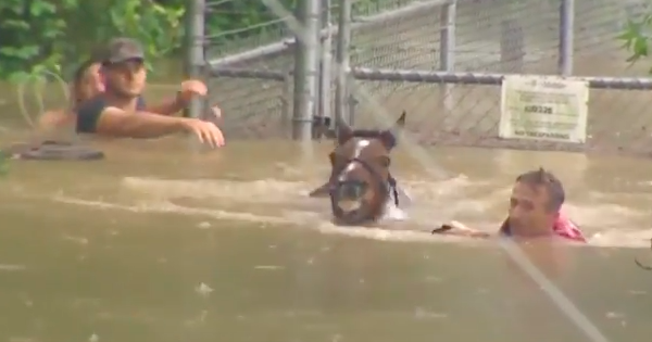 horse rescue houston flood